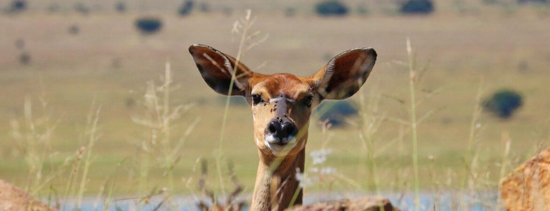 10 Days Rwanda Uganda Safari Trip