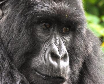 14 Days Massive Vacation in Uganda