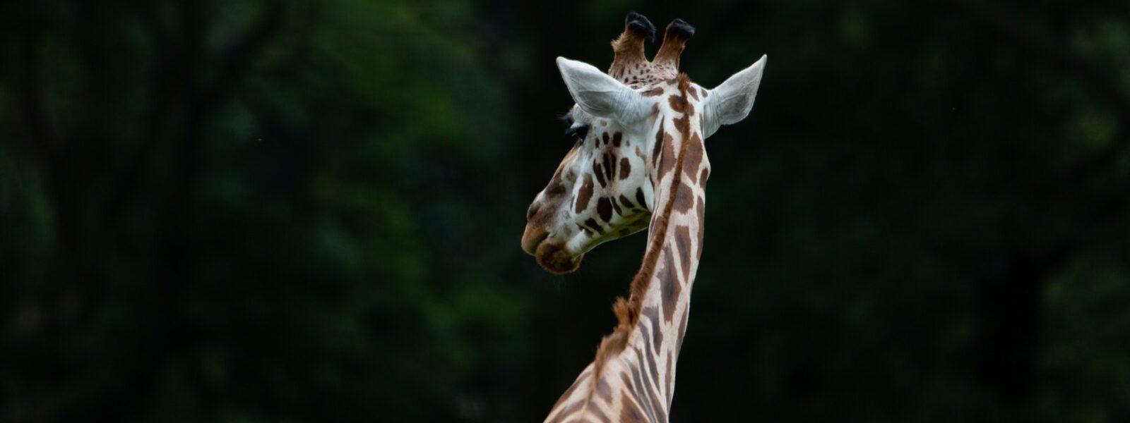 18 Days Uganda Primates & Wildlife Adventure