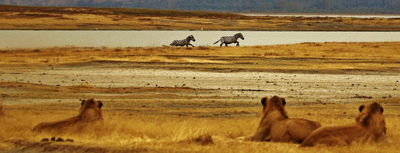 21 Days Grand Uganda Safari