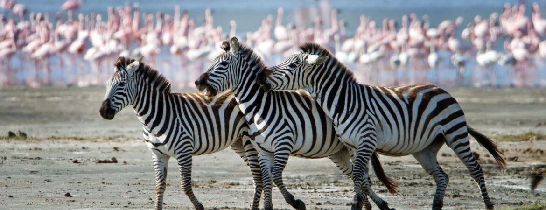 3 Days Arusha National Park Tour