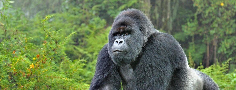 12 Days Uganda Gorillas & Rwenzori Hiking Safari