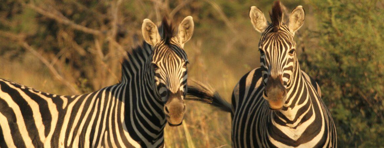 5 Days Serengeti & Ngorongoro Wildlife Safari