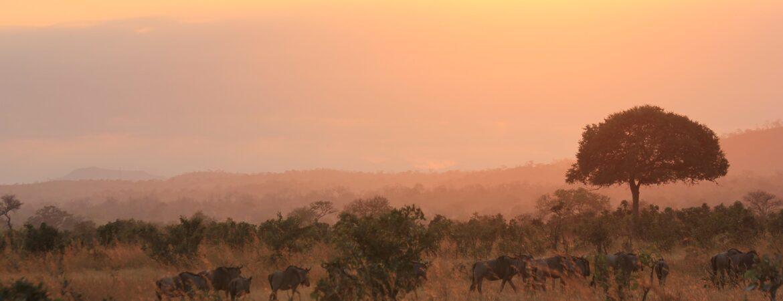 6 Days Rwanda Gorillas & Serengeti Wildlife Safari