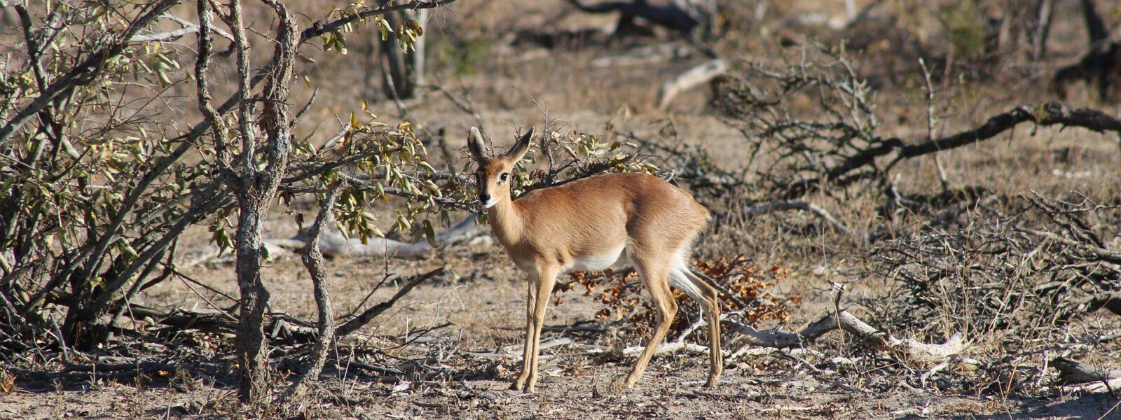 8 Days Remarkable Uganda Safari