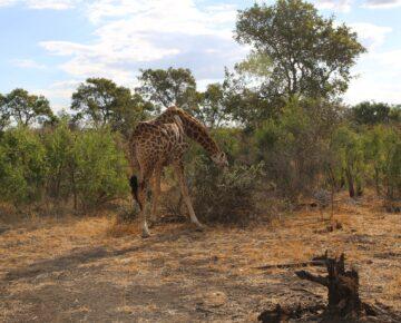 8 Days Rwanda Gorillas & WIldlife Safari