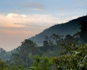 Bwindi Gorilla Trekking Regions