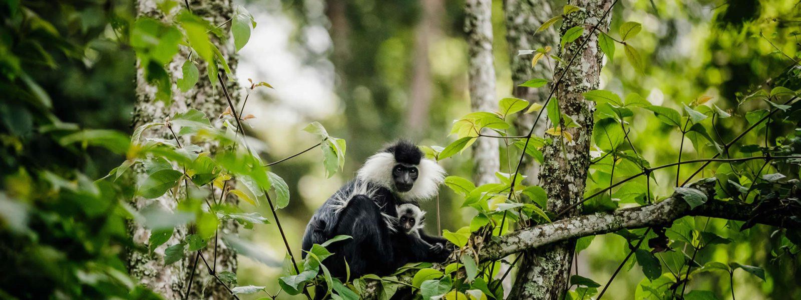 Rwandan Destinations