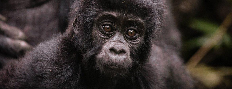 10 Days Uganda Gorilla Trek & Zanzibar Safari