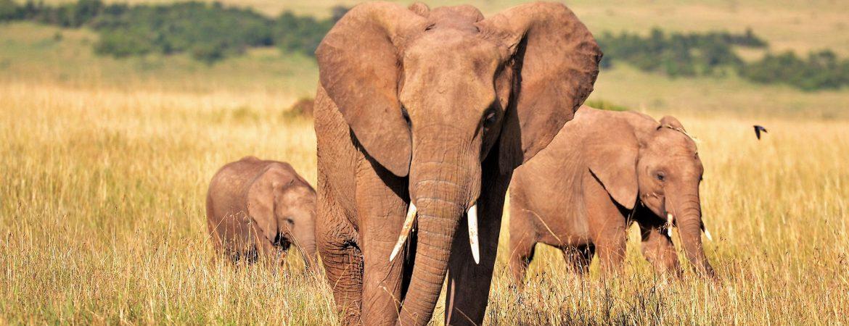 8 Days Classic Kenya Safari