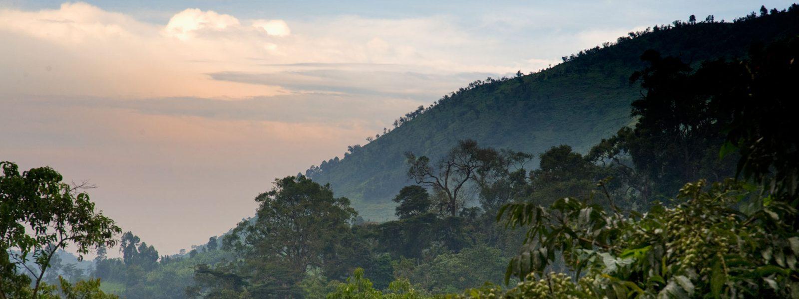 4 Days Bwindi Mgahinga Gorilla Safari