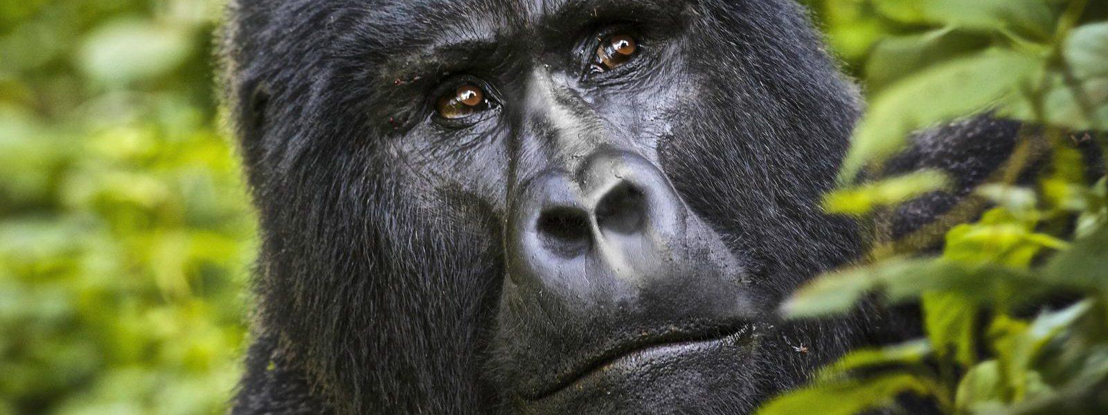 Uganda Travel Holidays
